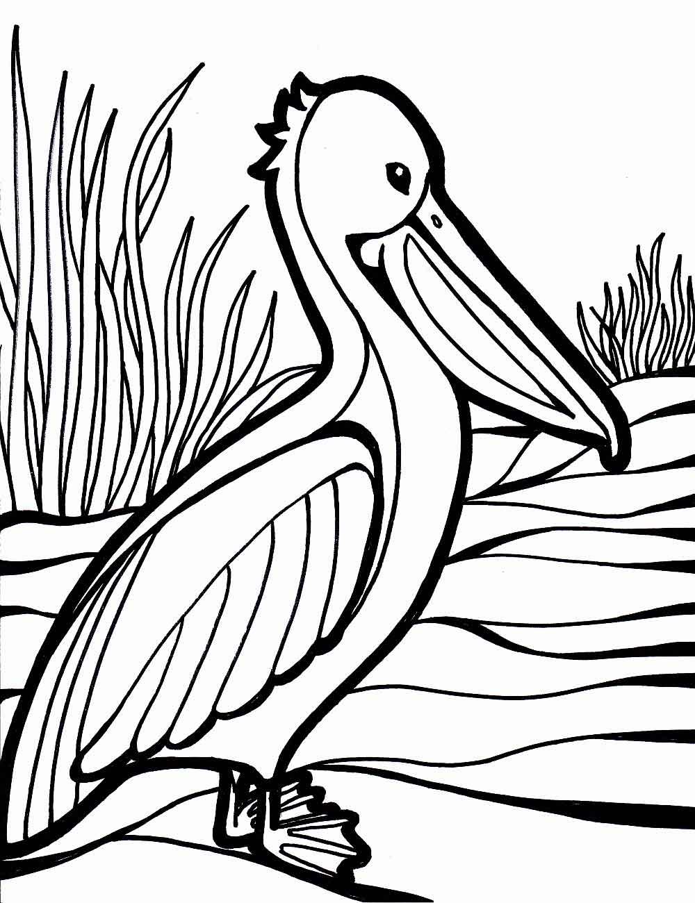 Раскраска птицы картинки