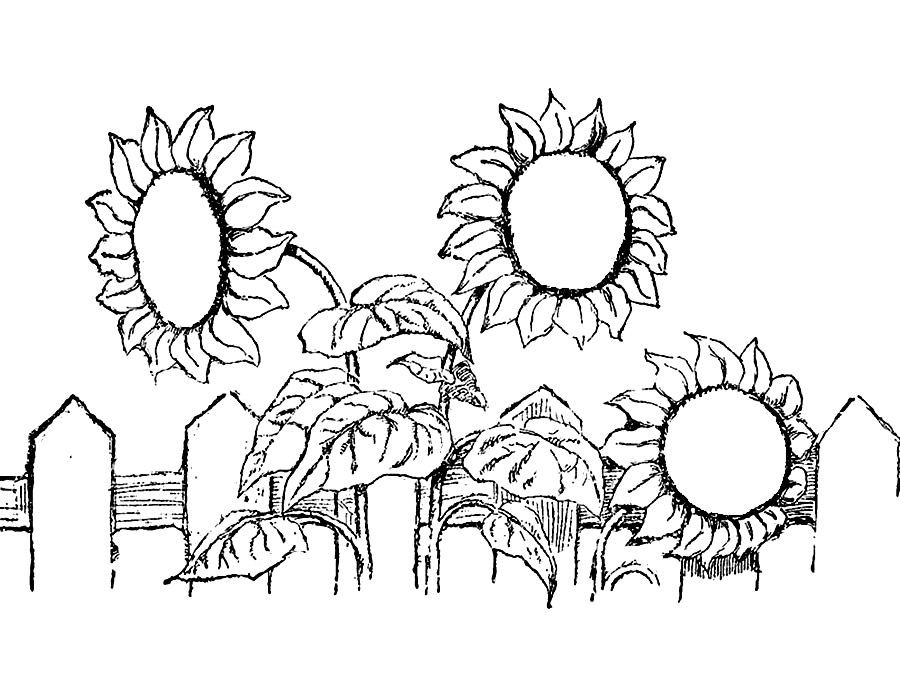 sunflowers coloring pages