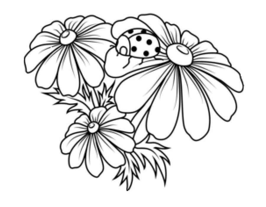 Раскраска Роза Wandering Minstrel   Раскраски Цветы