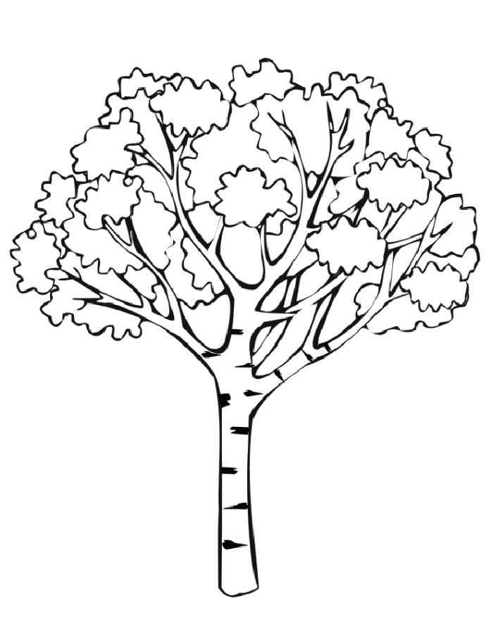 Картинка дерево для раскрашивания