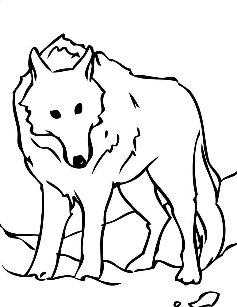 картинки для раскраски волка очаровательными
