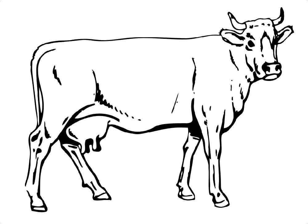 Днем свадьбы, картинки коровы черно белые