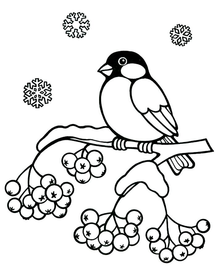 Раскраски зимующие птицы распечатать бесплатно