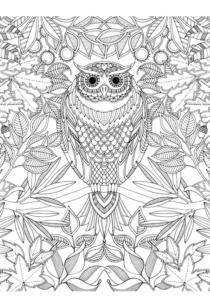 раскраска сова из волшебного леса раскраски антистресс