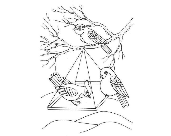 людмилы, раскраска кормушка для птиц распечатать понадобится