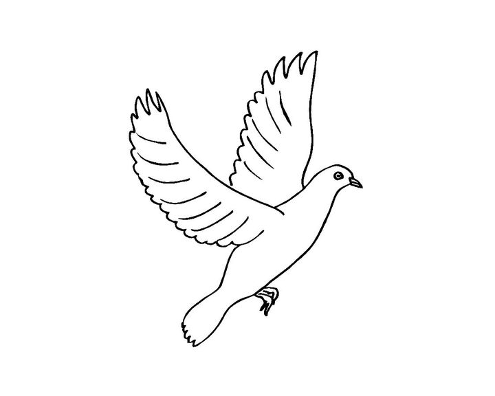 рисунки для раскрашивания голуби нем постарались навести