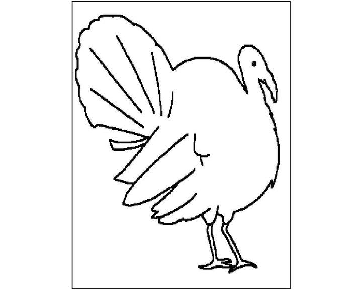 раскраска индюк раскраски птицы
