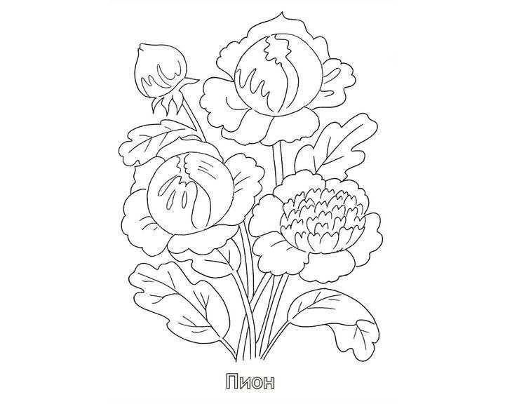 Раскраска Гвоздика Грин Трик   Раскраски Цветы