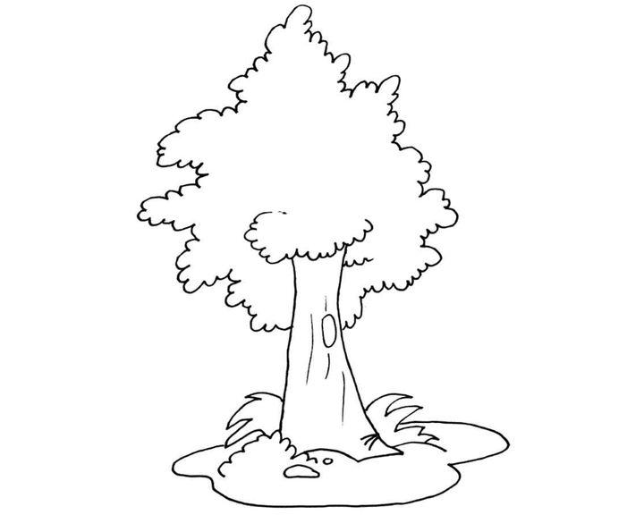 раскраска грецкий орех раскраски деревья