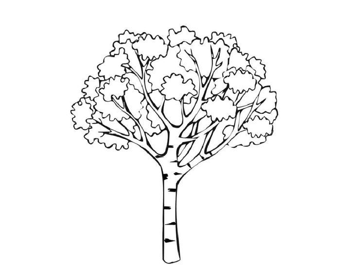 раскраска рябина дерево этой подборке вас