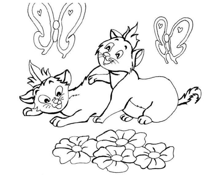 раскраска кошка пароды азиатская дымчатая раскраски кошки
