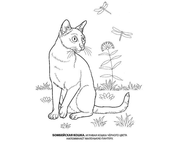 Раскраска Кошка пароды Корниш рекс | Раскраски Кошки