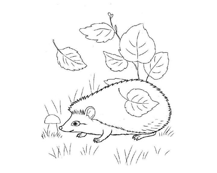раскраска ежик в листьях раскраски еж