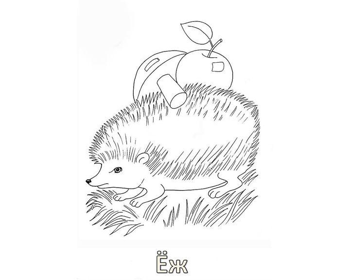 Раскраска Еж с грибами | Раскраски Еж