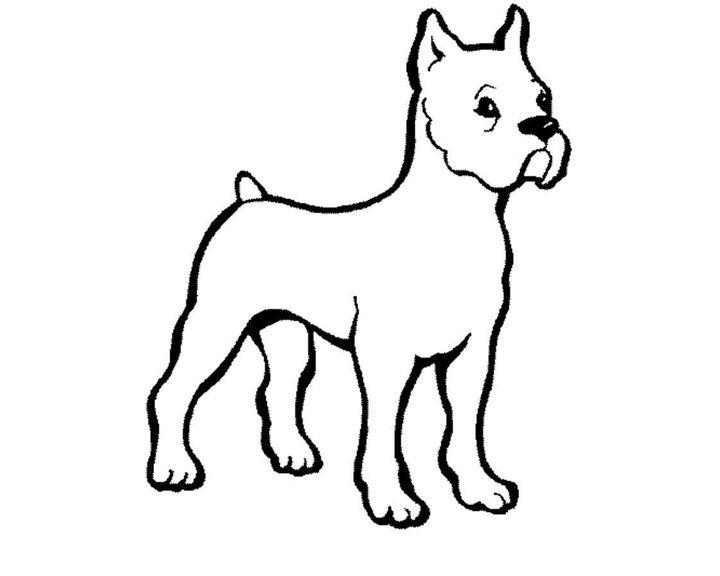 Раскраска Ротвейлер | Раскраски Собака