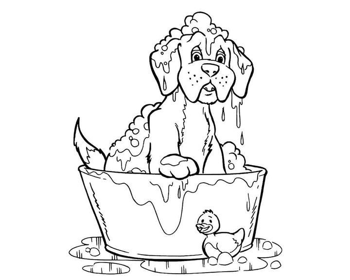 Раскраска Шарпей | Раскраски Собака
