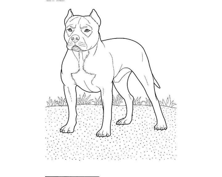 Раскраска Такса | Раскраски Собака