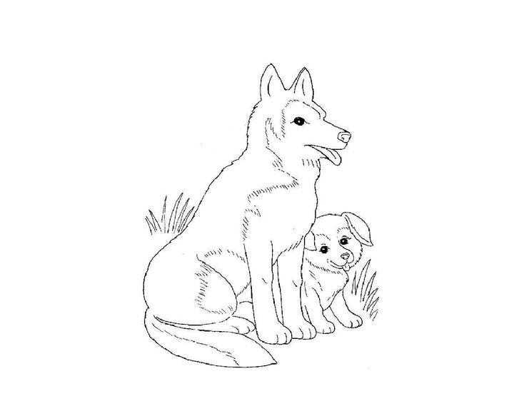 Раскраска Ши-тцу | Раскраски Собака