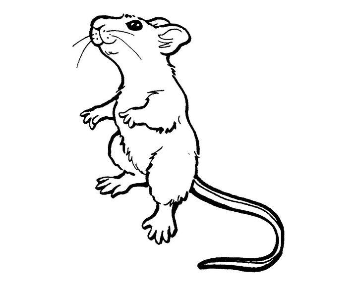 Днем рождения, мышь картинки раскраски