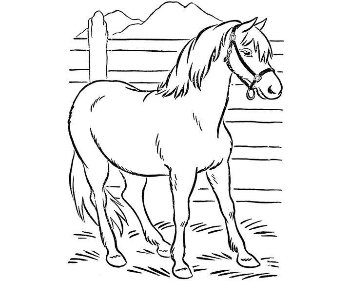 раскраска лошадь породы киргизская раскраски лошадь