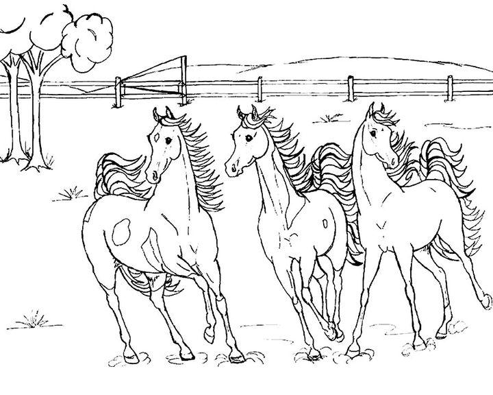 раскраска тройка лошадок раскраски лошадь