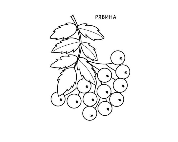 Спасибо поздравления, детский рисунок ветка рябины с ягодами